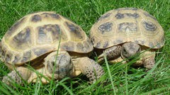"""Mork"" and ""Mindy"" - Care Advice for Young Tortoises"